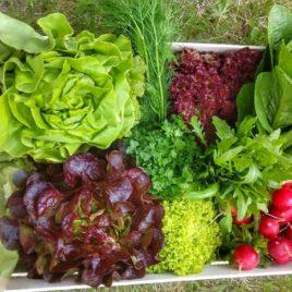 BIO bedýnka – zelenina